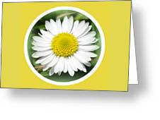 Daisy Closeup Greeting Card