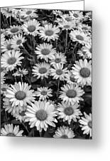 Daisy Cluster Vermont Flowers In Black And White Greeting Card