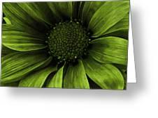 Daisy Daisy Avacado Greeting Card