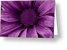 Daisy Daisy Grape Greeting Card