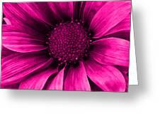 Daisy Daisy Neon Pink Greeting Card