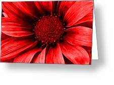 Daisy Daisy Neon Red Greeting Card