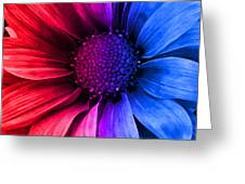 Daisy Daisy Red To Blue Greeting Card