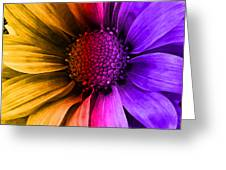 Daisy Daisy Yellow To Purple Greeting Card
