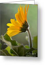 Daisy Derriere Greeting Card