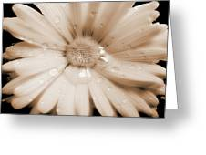 Daisy Dream Raindrops Sepia Greeting Card