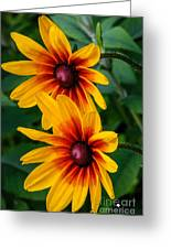 Daisy Duo Greeting Card