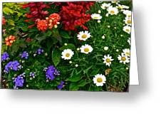 Daisy Field Greeting Card
