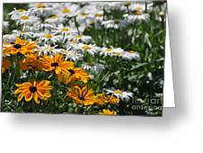Daisy Fields Greeting Card