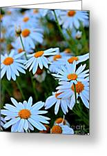 Daisy Fireworks Greeting Card