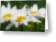 Daisy Flower Trio Greeting Card