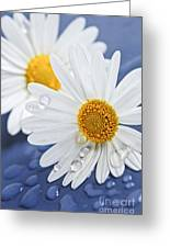 Daisy Flowers With Water Drops Greeting Card