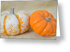Daisy Gourd And Pumpkin Greeting Card