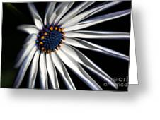 Daisy Heart Greeting Card