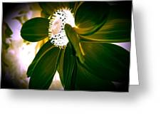 Daisy In Green Greeting Card