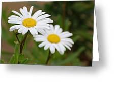 Daisy Greeting Card by Lorena Mahoney