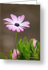 Daisy Mae Greeting Card