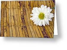 Daisy On Bamboo Greeting Card