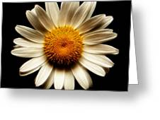 Daisy On Black Square Fractal Greeting Card