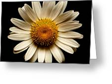 Daisy On Black Square Greeting Card