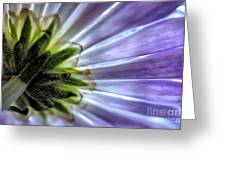 Daisy Petals Abstract Macro Greeting Card