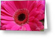 Daisy Pink Greeting Card
