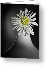 Daisy Pom Greeting Card