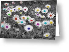 Daisy Rainbow Greeting Card