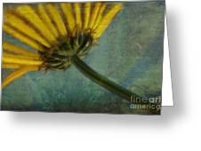 Daisy Reach Greeting Card