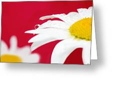Daisy Reflecting On Red V2 Greeting Card