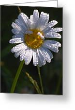 Daisy Greeting Card by Scott Gould