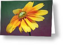 Daisy Visitor Greeting Card