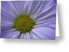 Daisy Greeting Card by Yvette Pichette