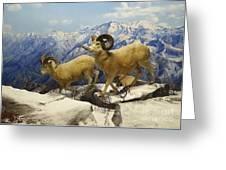 Dall Sheep Diorama Greeting Card