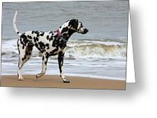 Dalmatian By The Sea Greeting Card