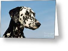 Dalmatian Dog Greeting Card
