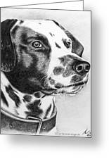 Dalmatian Portrait Greeting Card