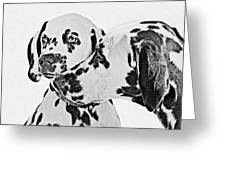 Dalmatians - A Great Breed For The Right Family Greeting Card