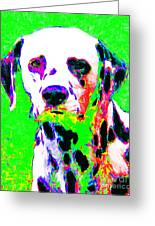 Dalmation Dog 20130125v3 Greeting Card by Wingsdomain Art and Photography
