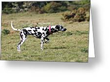 Dalmation Pretending To Be A Pointer Greeting Card