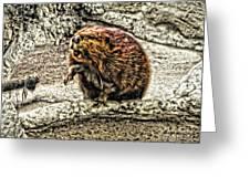 Dam Beaver Greeting Card