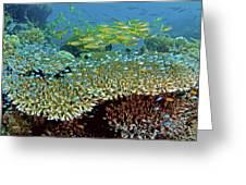 Damselfish (pomacentridae Greeting Card