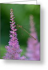 Damselfly Greeting Card by Juergen Roth