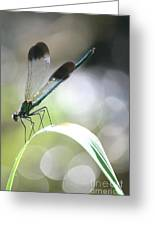 Damselfly On Little River  Greeting Card