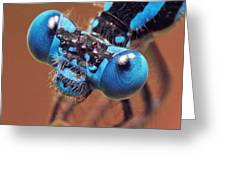 Damselfly Greeting Card by Walter Klockers