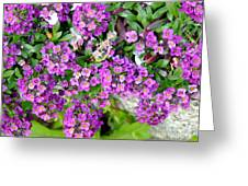 Dance Of Flowers Greeting Card