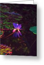 Dance Of The Night Lily Greeting Card