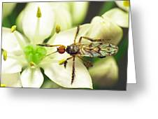 Dancefly On Onion Flower Greeting Card