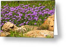 Dancing Among Rocks Greeting Card
