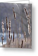 Dancing Cattails Greeting Card